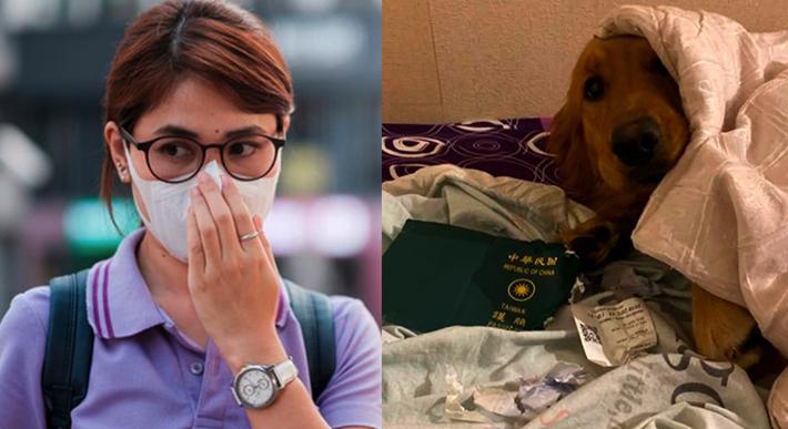 Porque su perro le destruyó su pasaporte, mujer se salva de ir a Wuhan, China