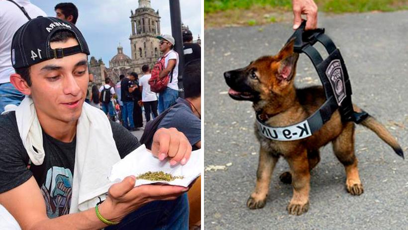 Gobierno no legalizará la marihuana porque muchos perritos podrían quedar desempleados