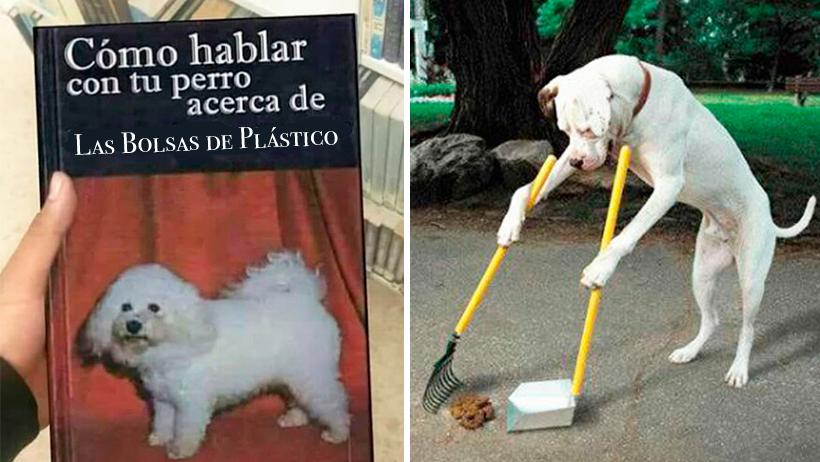 Guía básica sobre cómo hablar con tu perro sobre la Prohibición de Bolsas de Plástico