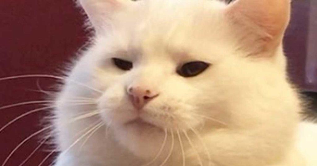 """¿Recuerdas al gato de los memes? Pues ya dio el """"marranazo"""" y así se ve hoy"""