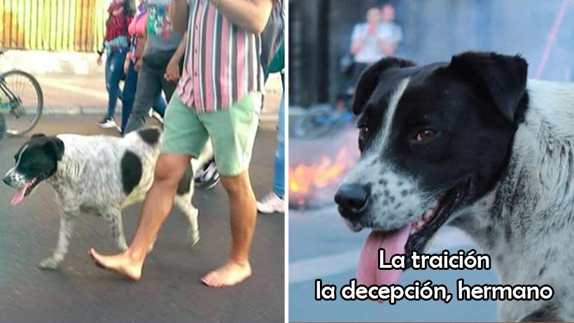 Pobre chiqui: crean marcha falsa para llevar a perrito marchista al veterinario