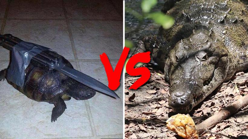 ¿Qué tan Tlaxcala está tu Tampico? Pues tortuga roba comida a cocodrilos