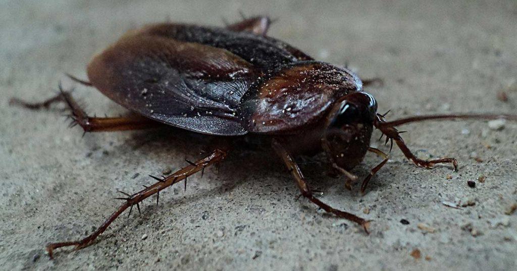 Zoológico pide que pongas a cucaracha nombre de tu ex