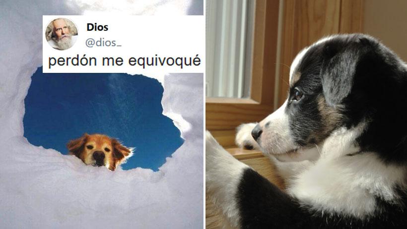 Dios se disculpa por hacer que los perritos vivan menos que las personas