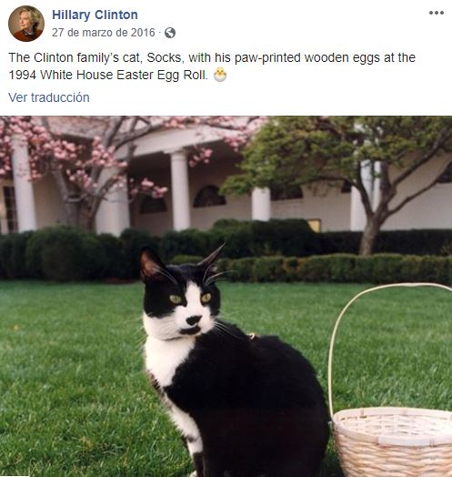 El gato de la familia Clinton