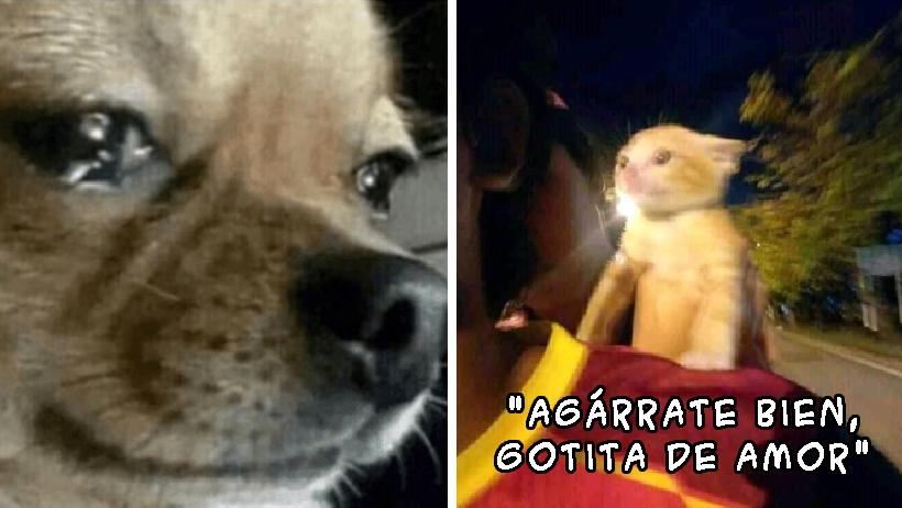 Nombres tontos de mascotas es maltrato animal.