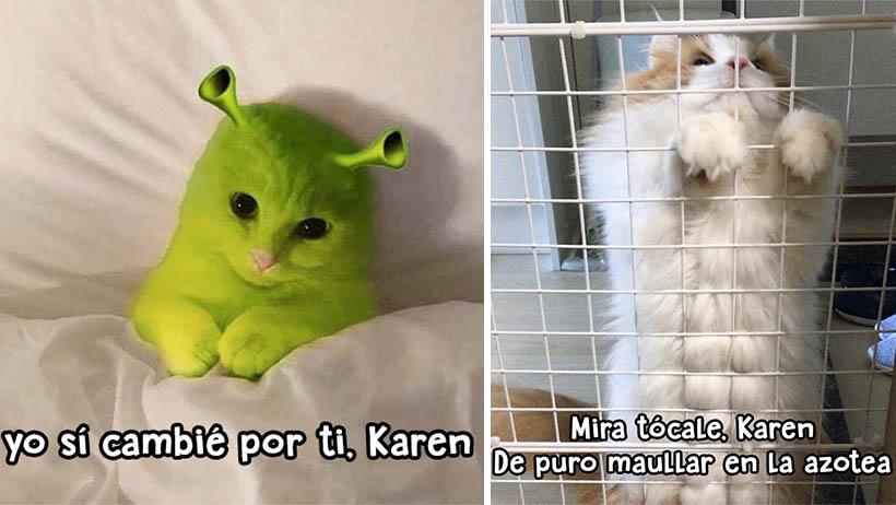Nuevos memes de Karen para festejar el día del gato