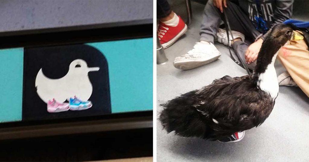 En honor al Pato con tenis, cambian ícono de estación del Metro