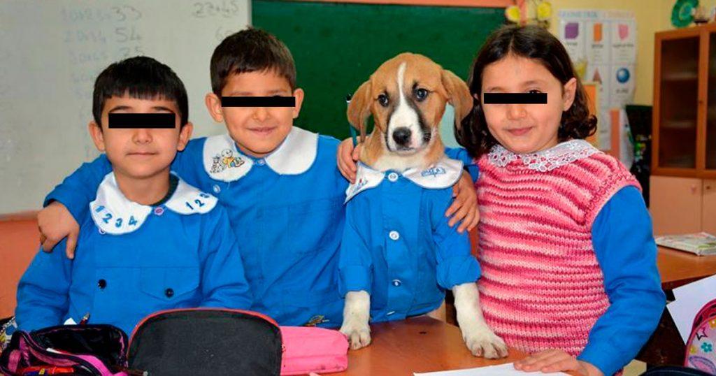Todo lo que sabemos sobre el perrito que va a la primaria
