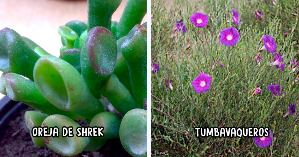 15 nombres de plantas que solo en México se los pudimos haber puesto así