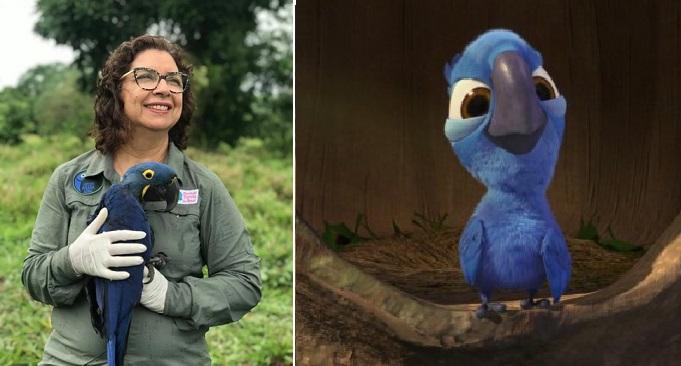 Como en Río: bióloga salva al guacamayo azul de la extinción y la nominan a premio