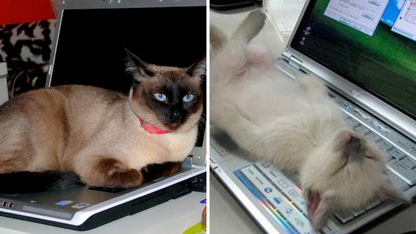 97% de los que hacen Home Office son interrumpidos por sus gatos: estudio