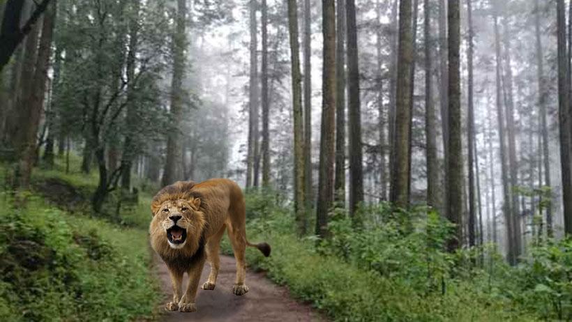 Después de 40 mil años, captan a unos leones en el Desierto de los Leones