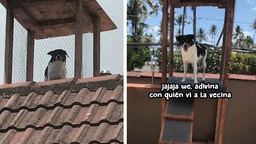 Perro chismoso