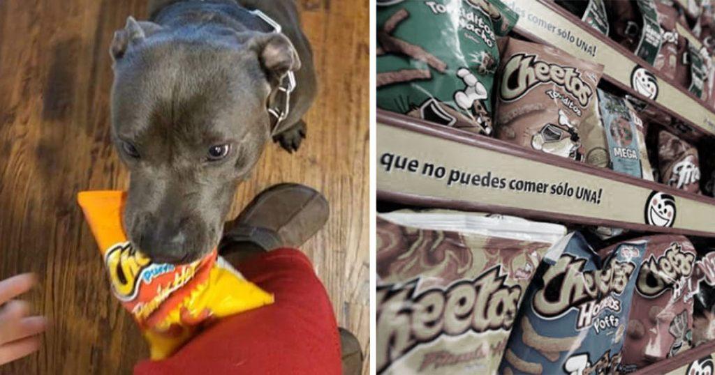 Perro falla en misión a la tienda por Cheetos azules, dice que había puros grises
