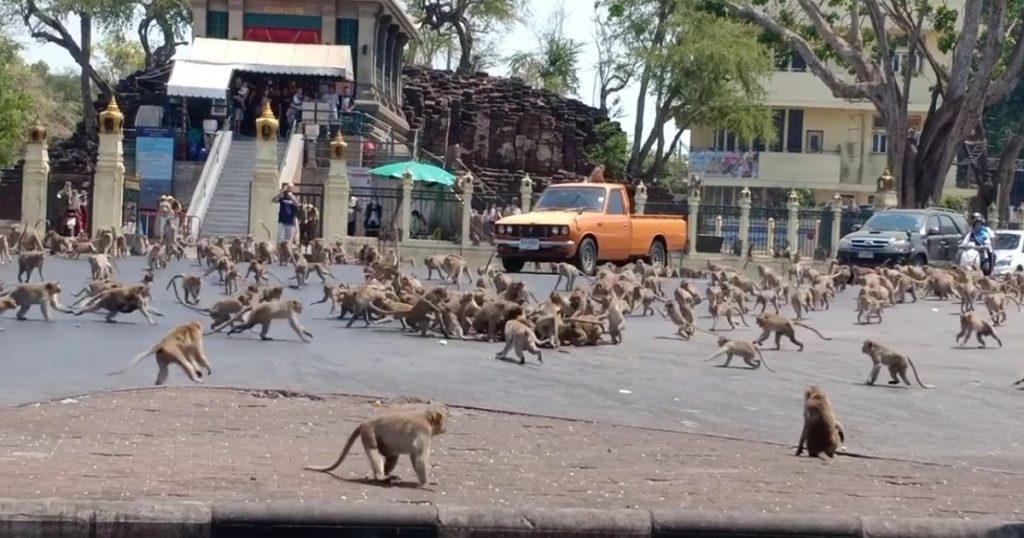 Monos en Tailandia protagonizan pelea por comida a falta de turistas (VIDEO)