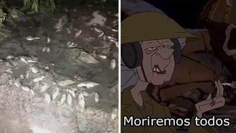 Apocalipsis nivel: Ya hasta están saliendo peces muertos de las coladeras en Tamaulipas