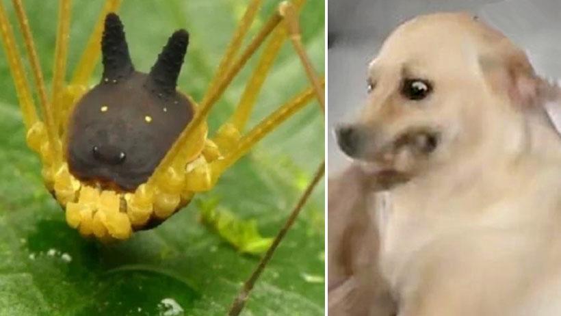 Dios se puso bien pacheco e inventó a la araña perro y el internet ya enloqueció