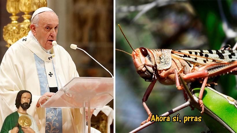 Cover Vaticano Plaga Langostas 2020