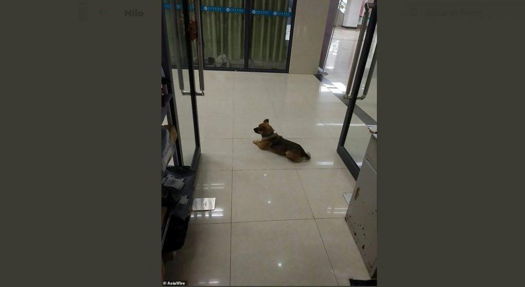 Hachiko 2.0: Perro lleva meses espera a su dueño muerto por COVID-19