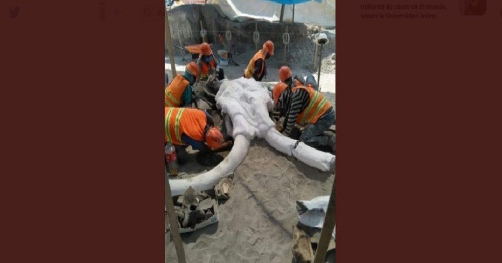 ¿Qué es esto, el pleistoceno? Hallan restos de mamut en Aeropuerto de Santa Lucía