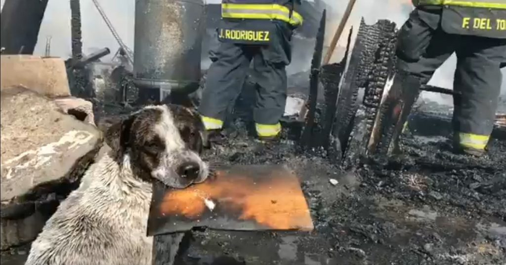 Laura Sad nivel: Perro llora por su casa destruida en incendio (VIDEO)