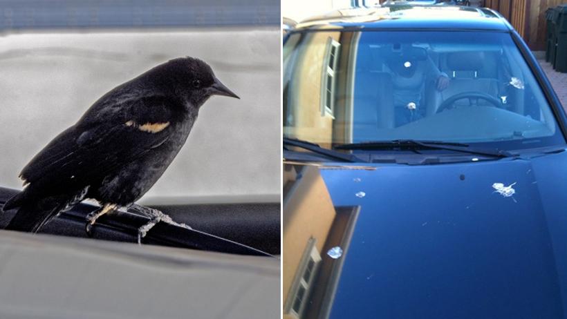 No habrá autos voladores, pero: inventan popó artificial de ave para proteger tu auto