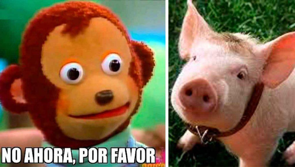 gripe cerdo