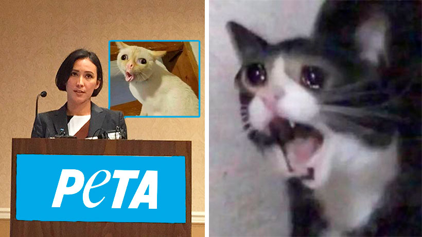 Cover Peta Gatos Memes
