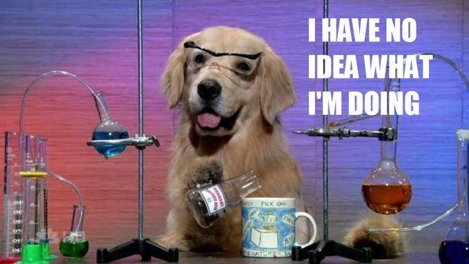 I Have no idea what I'm doing dog meme