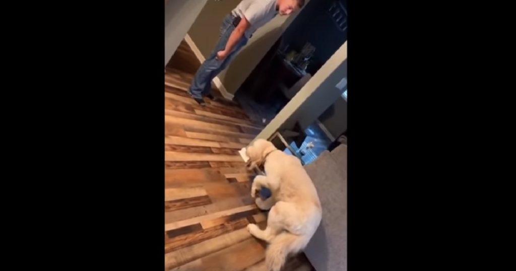 Slow motion activado: Perro camina en cámara lenta cuando su dueño lo regaña (VIDEO)