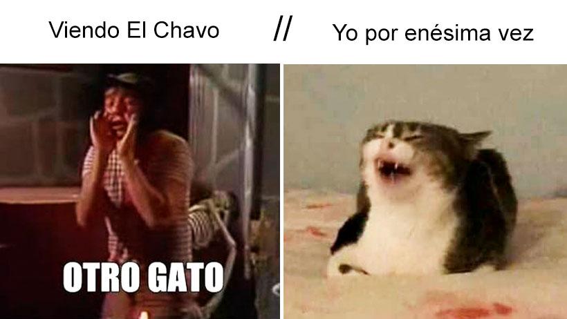 viendo el chavo gato meme