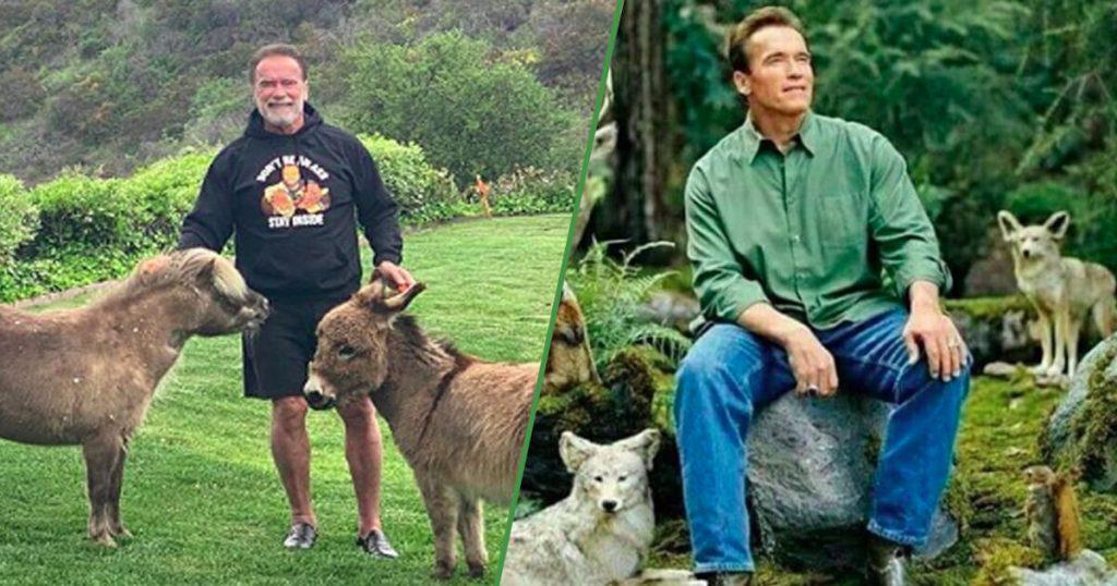 Del meme a la realidad: Arnold Schwarzenegger es uno con los animales
