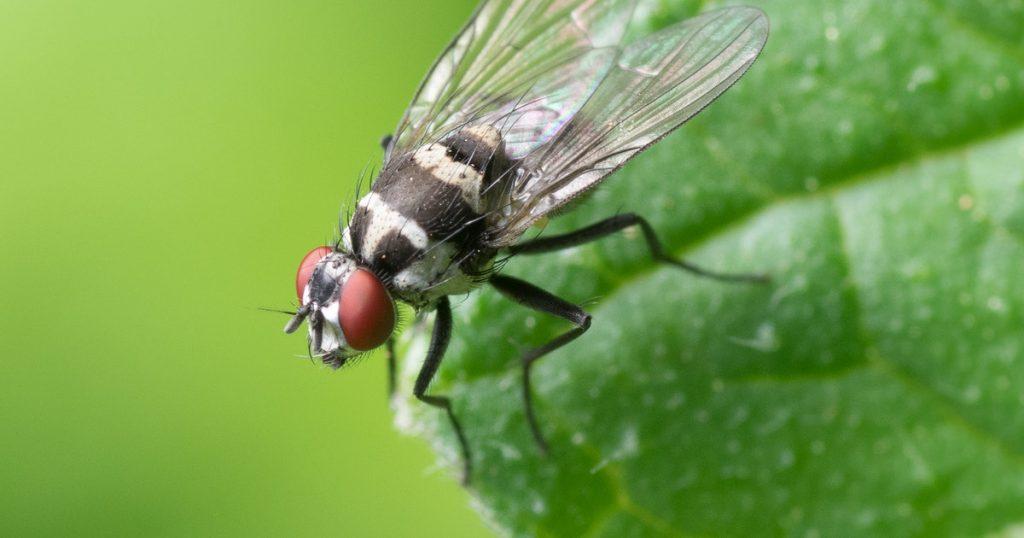 Thor y la banda: Científicos nombran a 5 especies de moscas con personajes de Marvel