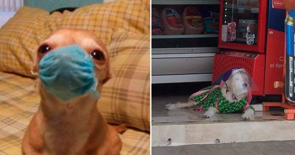 perritos con cubrebocas caretas tapabocas memes