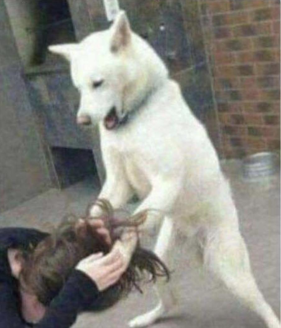 perros meme /nota covid