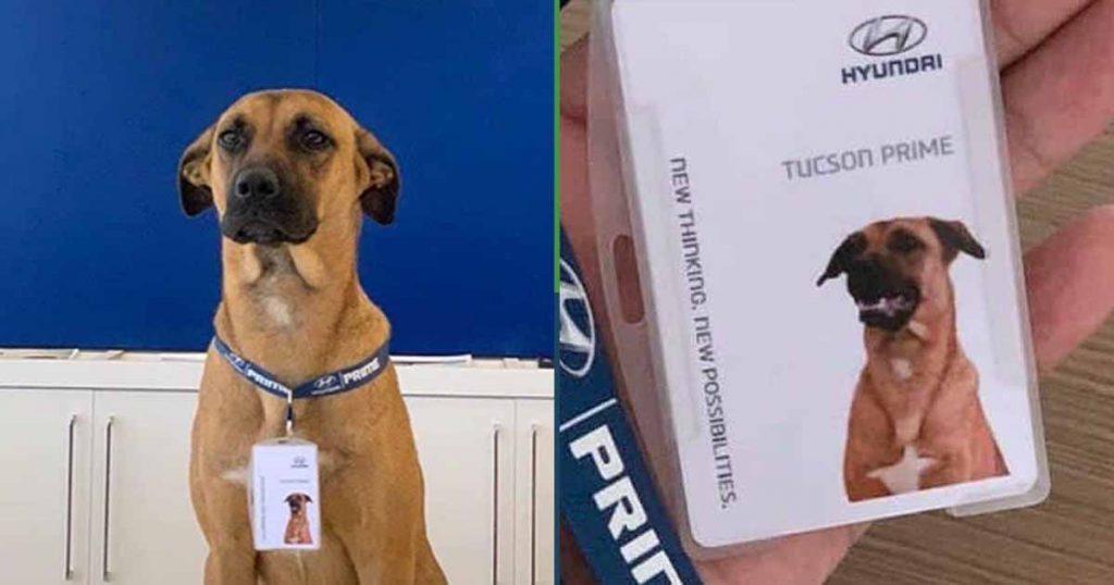 Fe en la humanidad restaurada: Agencia de autos contrata al perro callejero local