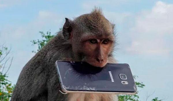 Clásico que un mono te roba el celular y cuando lo encuentras se tomó selfies