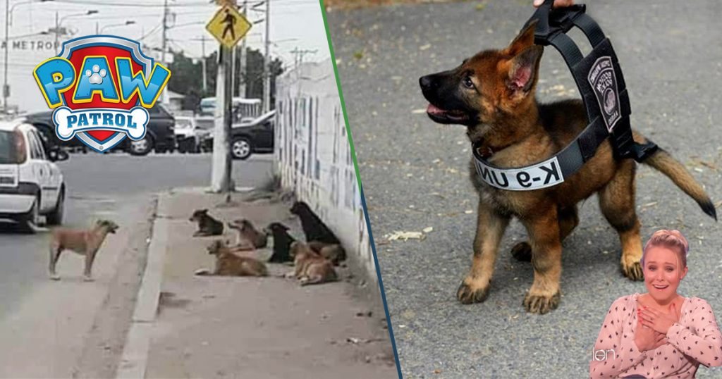 Cover Paw Patrol Iniciativa Secretaría Seguridad Pública
