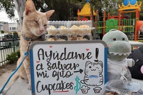 Gato vende cupcakes site
