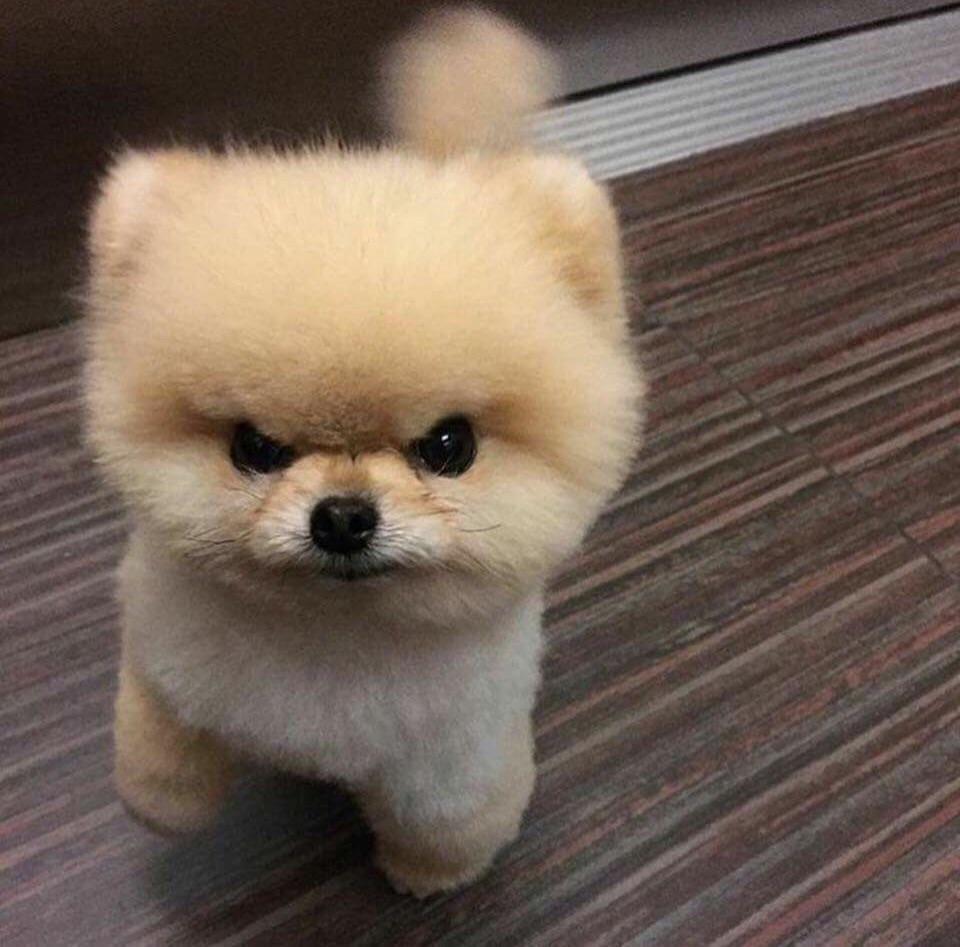 angry cute dog