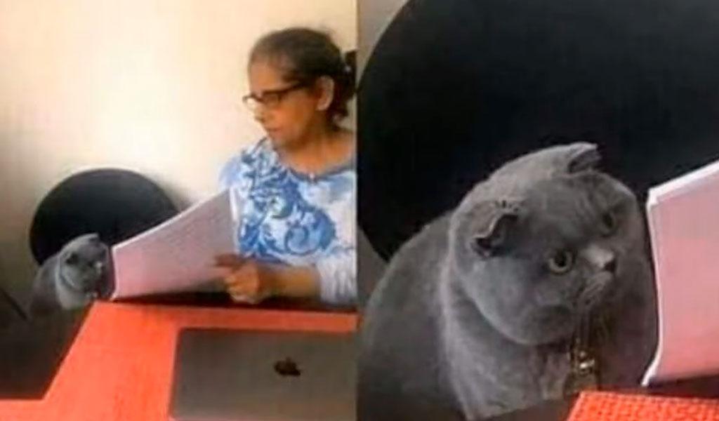 Gato maestra meme