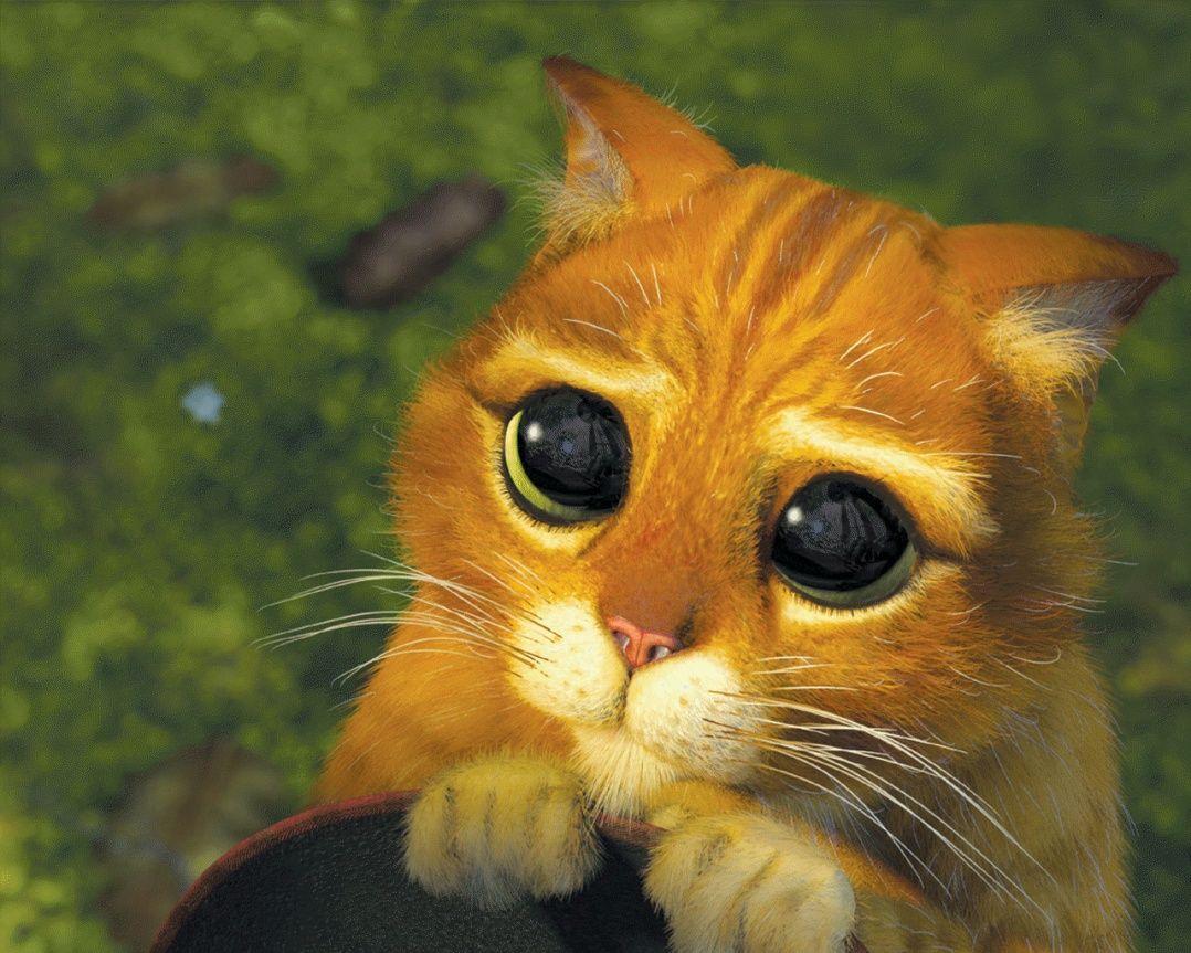 gato con botas ojos