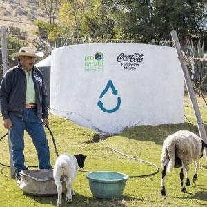 ¿Cómo funcionan los humedales basados en la naturaleza que la IMCC promoverá en Edomex, Quintana Roo, Jalisco y Baja California?