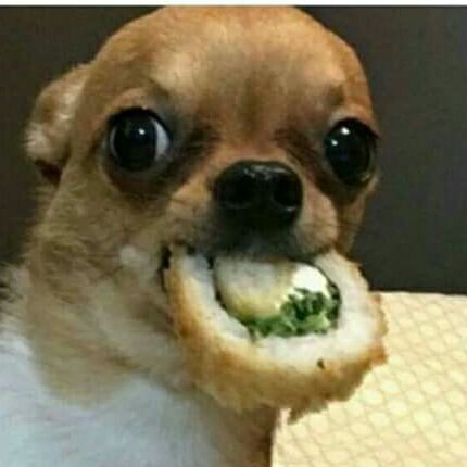 dog sushi meme